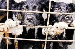 Hayvanların Sokağa Atılmasının Yasalarla Cezası Var Mıdır ?